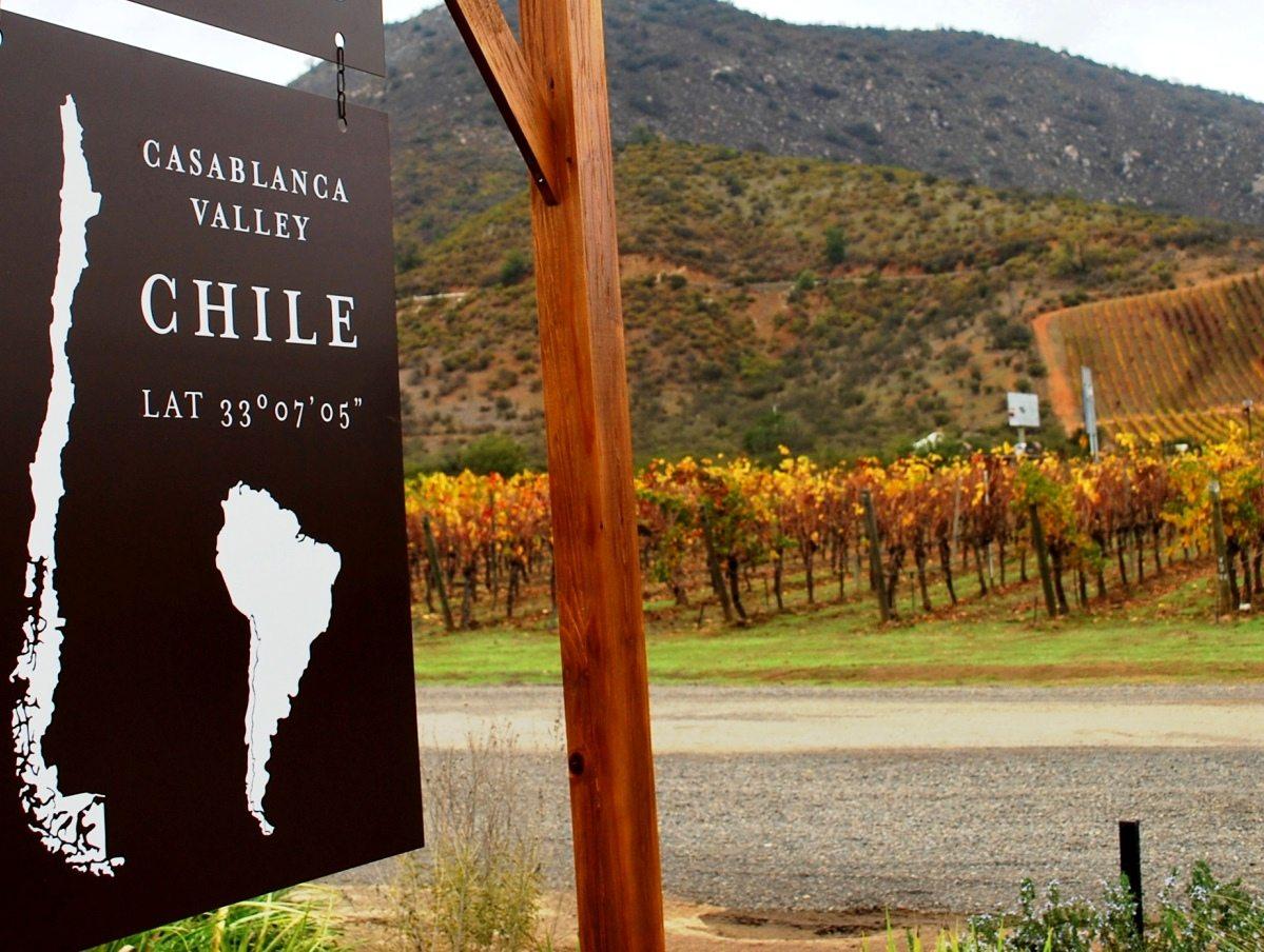 Valle-de-Casablanca-Chile-vinho-vinícola-LikeChile